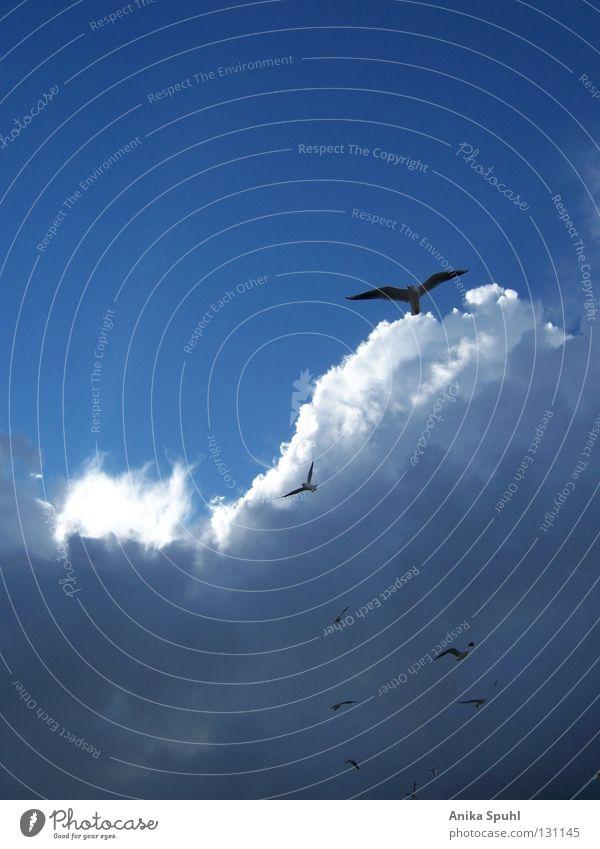 - photograph of freedom - Himmel weiß Sonne blau Strand Wolken Ferne Freiheit hell Vogel Küste fliegen frei Tiergruppe Ostsee Lachmöwe