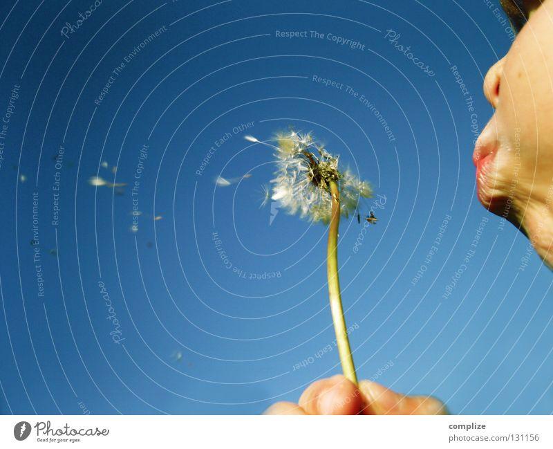 Blasebalg! Löwenzahn Blume blasen Atem Speichel fliegen Unbeschwertheit Unbekümmertheit himmelblau Wunsch Spielen Fröhlichkeit Hoffnung Pflanze Wind Herbst