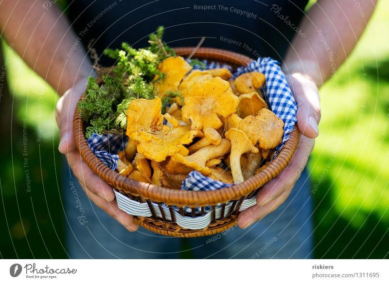Abendessen :) Mensch Mann Sommer Erwachsene gelb Herbst maskulin Schönes Wetter festhalten Moos Pilz Korb Vesper Pfifferlinge