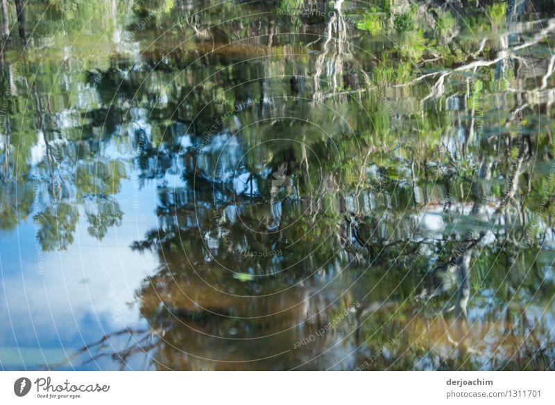 Ein  Outback Fluß. Sehr schöne Spiegelung. Von einem Baum spiegeln sich Äste und Zweige. exotisch ruhig Ausflug Umwelt Natur Wasser Sommer Schönes Wetter