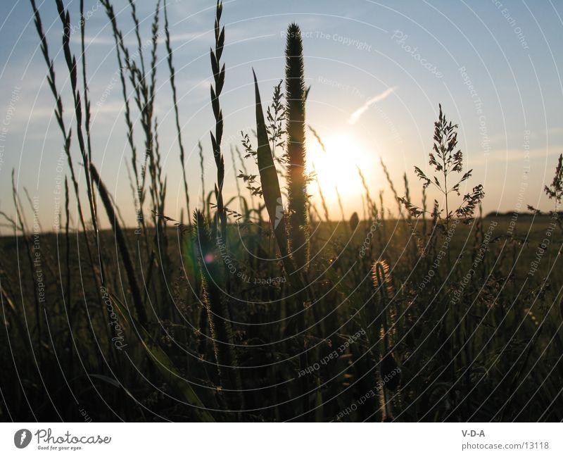 Abend Feld Natur Sonne Feld