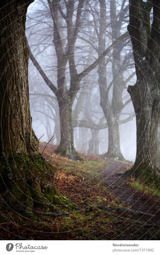 Weg zwischen den Linden..... Natur Pflanze Baum Einsamkeit Landschaft ruhig Winter dunkel Wald Herbst Wege & Pfade Zeit Regen Schneefall Nebel wandern