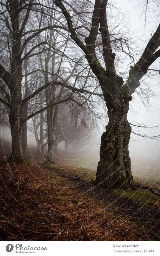 Knorrig.... Natur Pflanze Baum Einsamkeit Landschaft ruhig dunkel Herbst Wege & Pfade Zeit Stimmung Regen Schneefall Nebel wandern Klima
