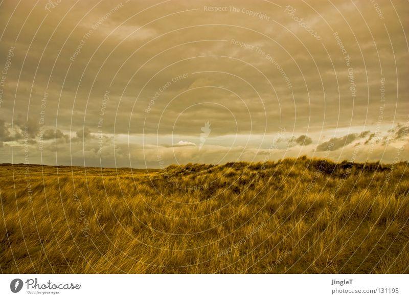 on the dunes Tal Wellen Gras Hügel Wolken Luft Erholung Lebenskraft Unendlichkeit Ameland Strand Küste Stranddüne Berge u. Gebirge auf und ab Sand Dynamik