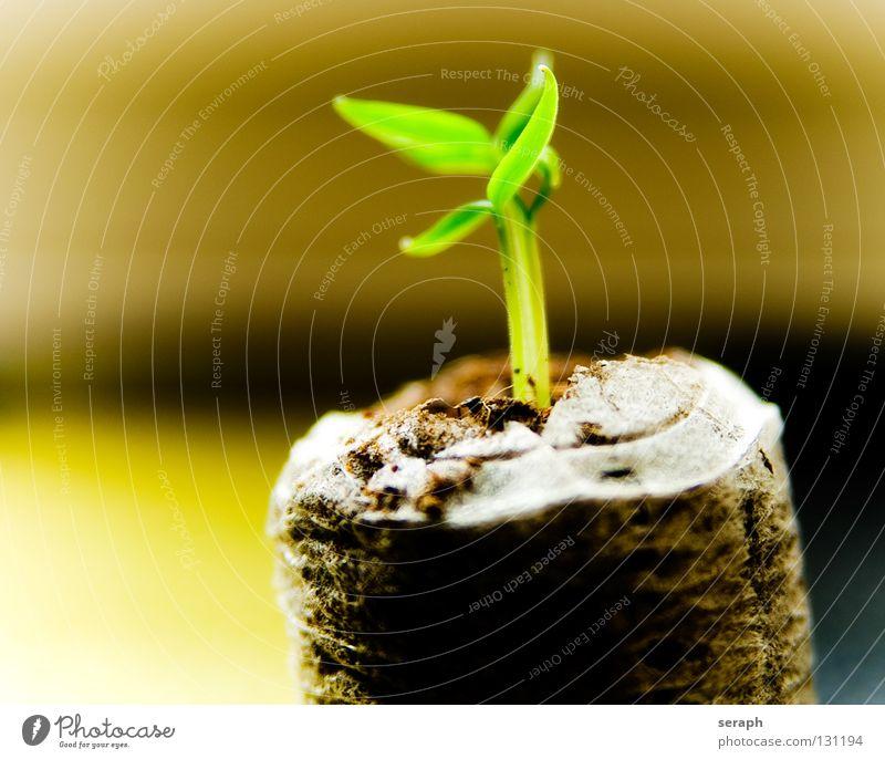 Wachstum Pflanze Baum Blatt Wachstum frisch Kraft Symbole & Metaphern Umweltschutz Botanik Dynamik Samen Blumentopf Trieb Saatgut pflanzlich Zimmerpflanze