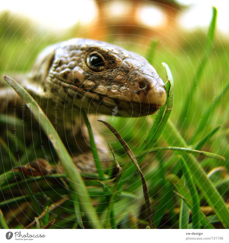 WAHNSINN SCHON IN UNSINN GARTEN weiß grün Tier Farbe schwarz gelb Auge Gras Glück Garten Stil Denken laufen Haut verrückt Nase