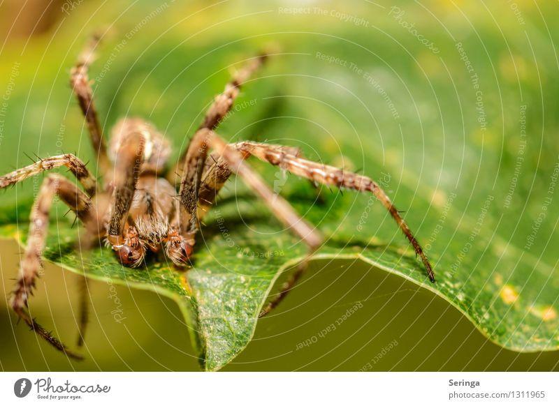 Ich glaube ich Spinne Natur Pflanze Sommer Landschaft Blatt Tier Wald Umwelt Blüte Wiese Gras Garten Park Feld Insekt fangen