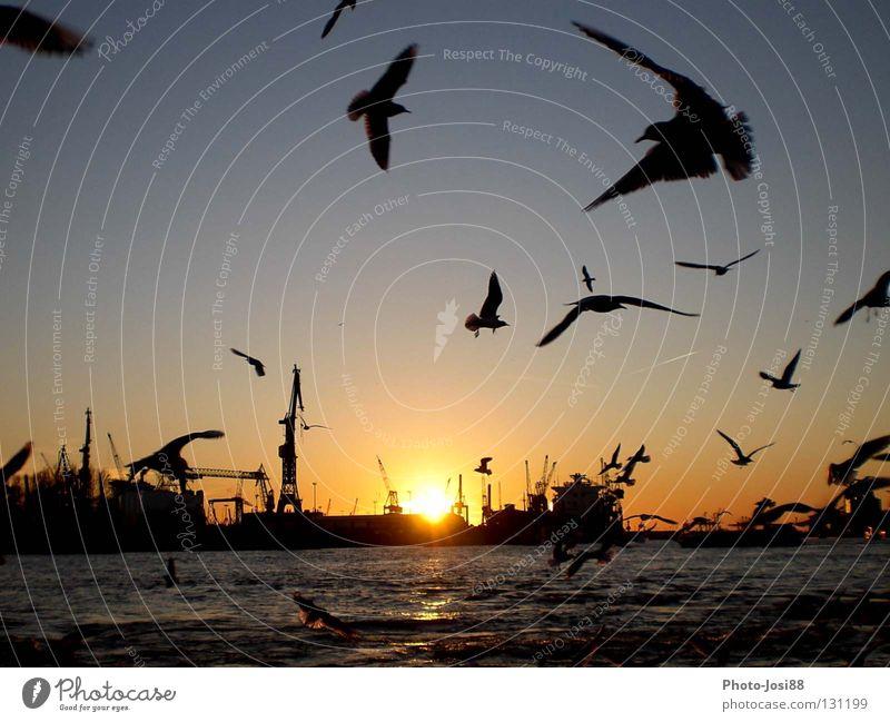 Landungsbrücken Sonnenuntergang Vogel Möwe Wasserfahrzeug Himmelskörper & Weltall Anlegestelle Hamburg