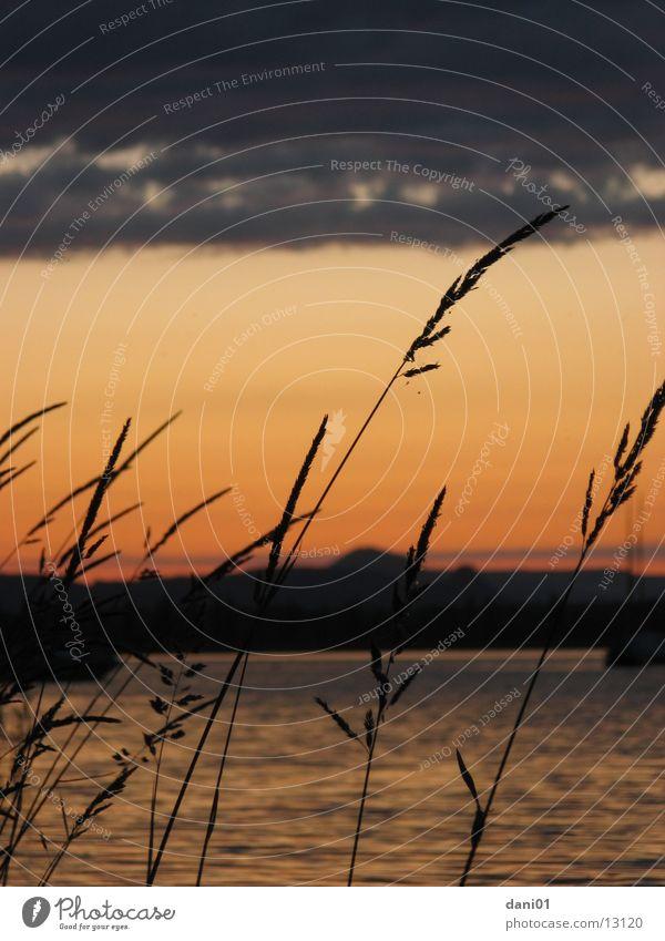 Hohentwiel See Sonnenuntergang Schilfrohr Grad Celsius Vulkan Wasser hegau Bodensee