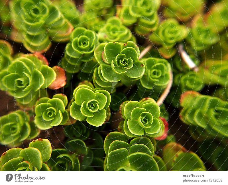 Macro Garden Action: Green One Natur Pflanze Sommer Schönes Wetter Blatt Blüte Grünpflanze Garten Blühend knien krabbeln Wachstum frisch grün ruhig Leben