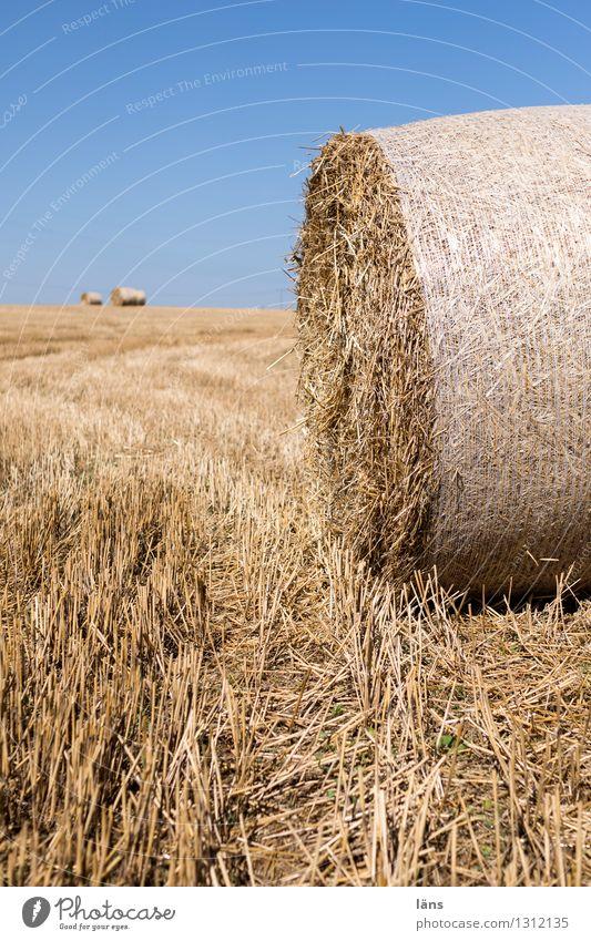 Landwirtschaft Feld Stroh Rolle gerollt gepresst Menschenleer