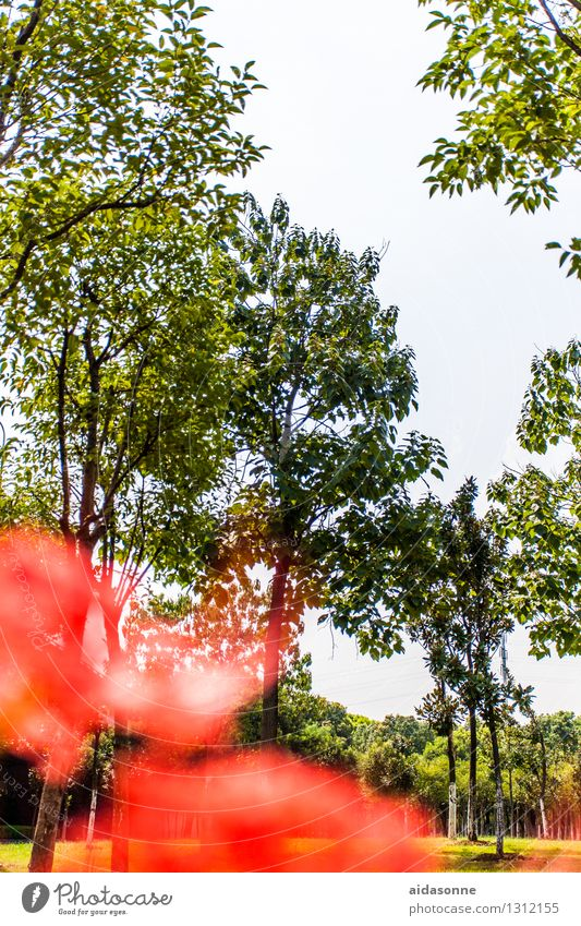 Park in Jiangyin Natur Landschaft Pflanze Himmel Wolkenloser Himmel Sommer Garten Wald achtsam Gelassenheit ruhig Einsamkeit Jiangsu China Farbfoto