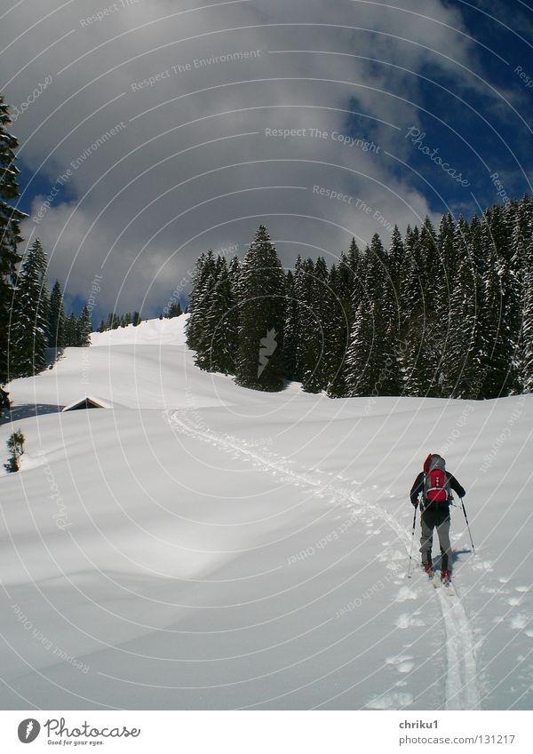 ....Richtung Frühling....? Skitour Ferien & Urlaub & Reisen Wald Schneespur Skispur Mann Skifahrer Rucksack Wolken Freizeit & Hobby ruhig Skifahren Bergsteigen