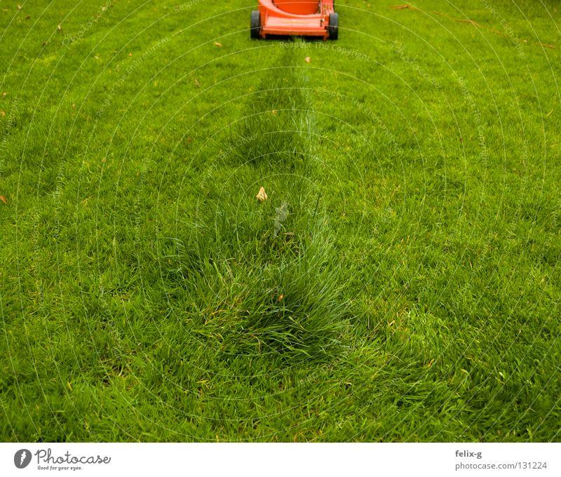 Endspurt Blume grün rot Wiese Garten Park Linie Sportrasen Spuren Reihe Rest letzte Rasenmäher rasenmähen