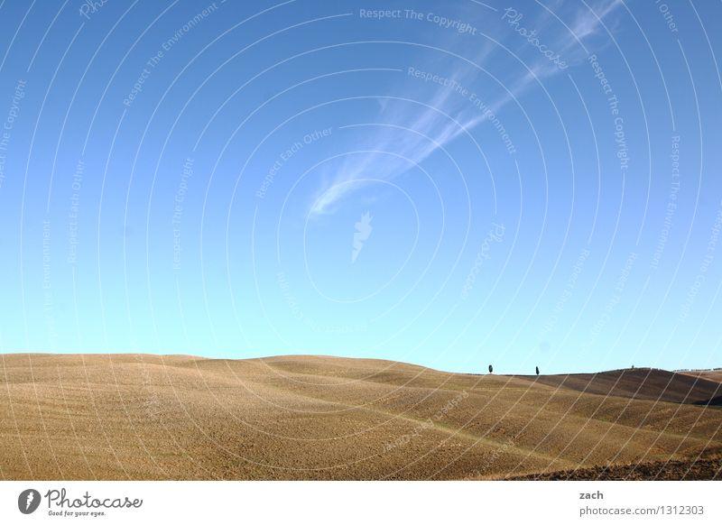 aufgeräumt Umwelt Landschaft Erde Sand Himmel Sommer Schönes Wetter Dürre Pflanze Baum Zypresse Feld Hügel Toskana Italien trocken blau braun Ferne Farbfoto