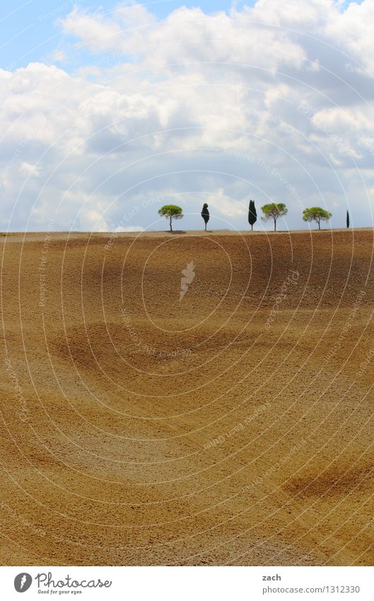 toskanische Verhältnisse Umwelt Natur Landschaft Erde Sand Himmel Wolken Sommer Schönes Wetter Dürre Baum Zypresse Feld Hügel Italien Toskana Wachstum blau gelb