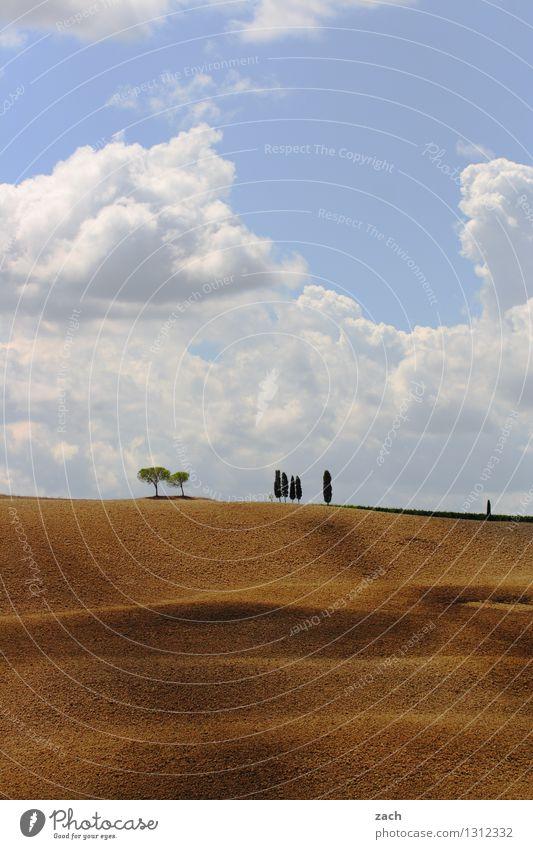 Begegnungen Umwelt Natur Landschaft Erde Sand Himmel Wolken Sommer Schönes Wetter Dürre Baum Zypresse Feld Hügel Italien Toskana Wachstum blau gelb