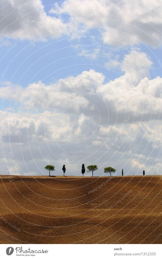 gut sortiert Umwelt Natur Landschaft Erde Sand Himmel Wolken Sommer Schönes Wetter Dürre Pflanze Baum Zypresse Pinie Feld Hügel Italien Toskana Val d'Orcia