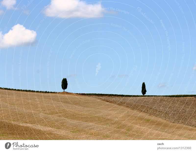 Begegnung Umwelt Natur Landschaft Erde Sand Himmel Wolken Sommer Schönes Wetter Pflanze Baum Zypresse Feld Hügel Toskana Italien Val d'Orcia blau braun 2 Paar