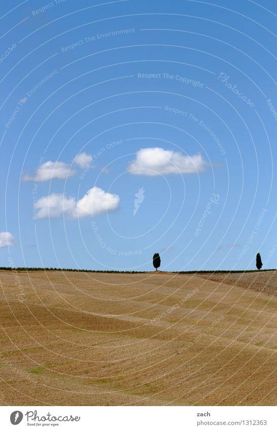 Duett Umwelt Natur Landschaft Erde Sand Himmel Wolken Sommer Schönes Wetter Dürre Baum Zypresse Feld Hügel Italien Toskana Wachstum blau gelb Einsamkeit einzeln