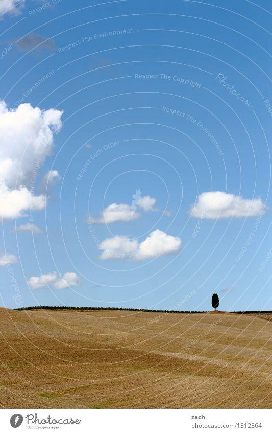 übriggeblieben Umwelt Natur Landschaft Erde Sand Himmel Wolken Sommer Schönes Wetter Dürre Baum Zypresse Feld Hügel Italien Toskana Wachstum blau gelb