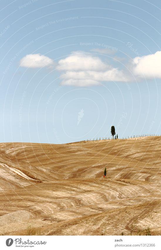 übriggeblieben Himmel Natur blau Sommer Baum Einsamkeit Landschaft Wolken Umwelt gelb Sand Feld Wachstum Erde einzeln Italien