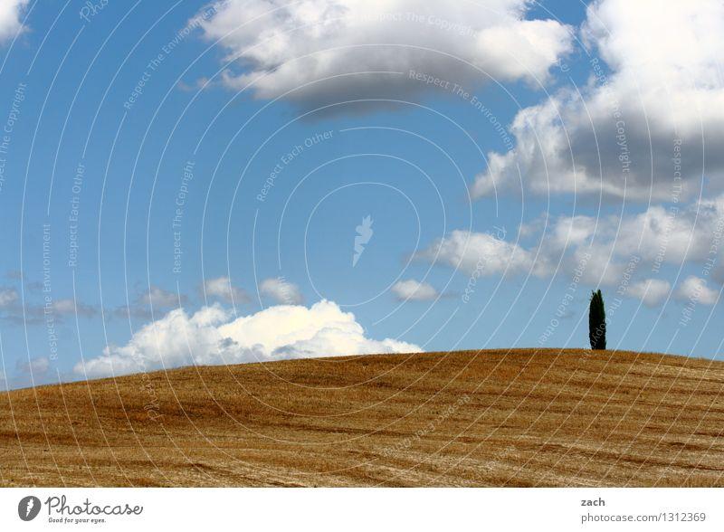 kümmerlich | Vegetation Himmel blau Pflanze Baum Einsamkeit Wolken gelb Sand Feld Wachstum Erde einzeln Italien Schönes Wetter Hügel Wüste