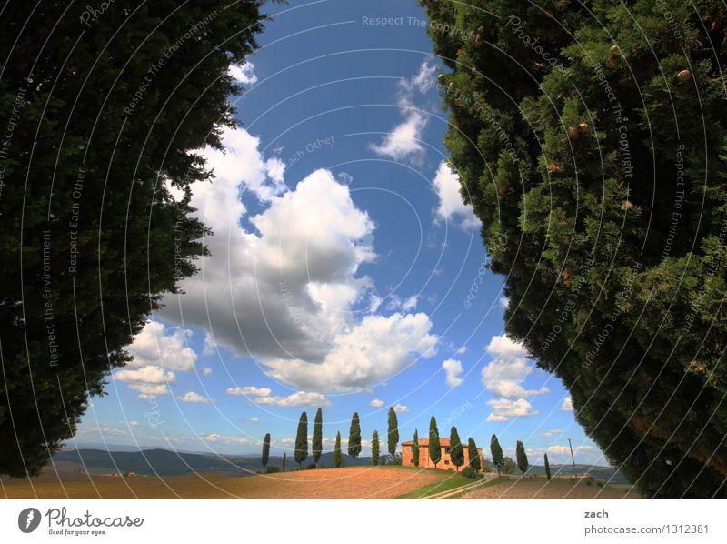 Zuflucht Landschaft Erde Sand Himmel Wolken Sommer Schönes Wetter Pflanze Baum Zypresse Park Feld Hügel Pienza Italien Toskana Einfamilienhaus Straße