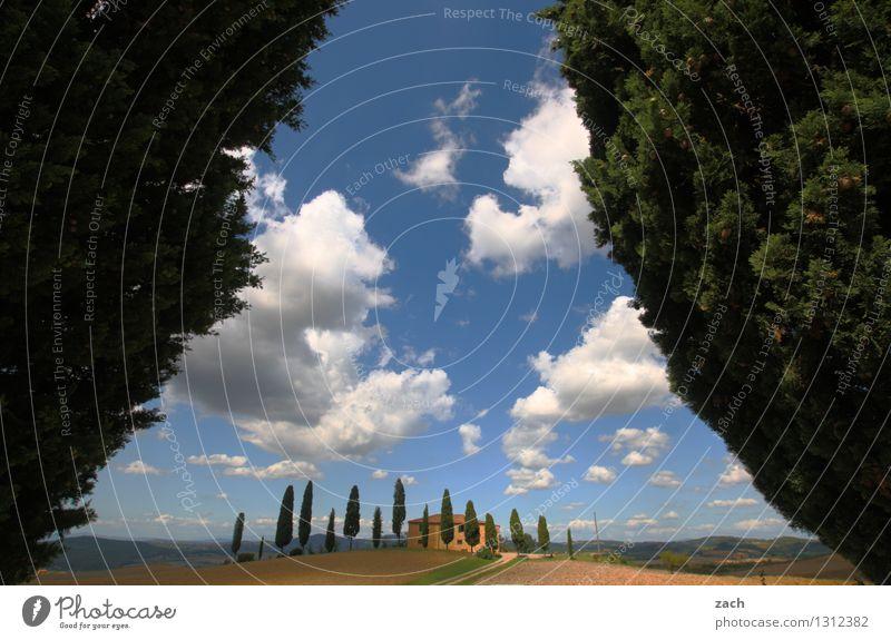 ankommen Landschaft Erde Sand Himmel Wolken Sommer Schönes Wetter Pflanze Baum Zypresse Park Feld Hügel Pienza Italien Toskana Einfamilienhaus Straße