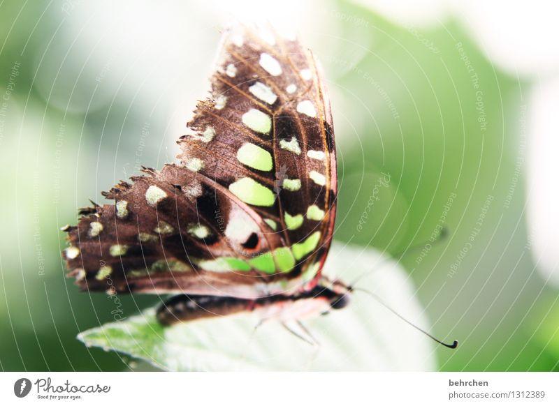grün ja grün... Natur Pflanze Tier Frühling Sommer Schönes Wetter Baum Blatt Garten Park Wiese Wildtier Schmetterling Flügel 1 beobachten Erholung fliegen