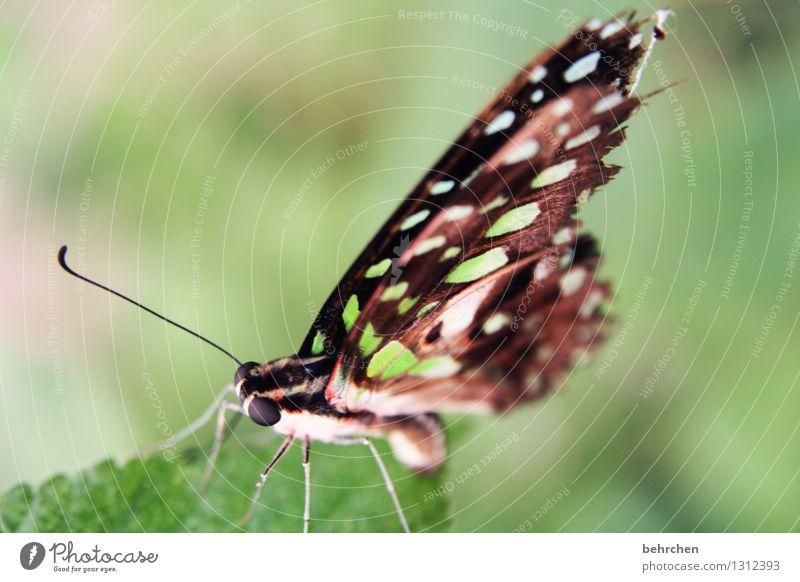 schmetterviech Natur Pflanze Tier Frühling Sommer Schönes Wetter Baum Blatt Garten Park Wiese Wildtier Schmetterling Tiergesicht Flügel 1 beobachten Erholung