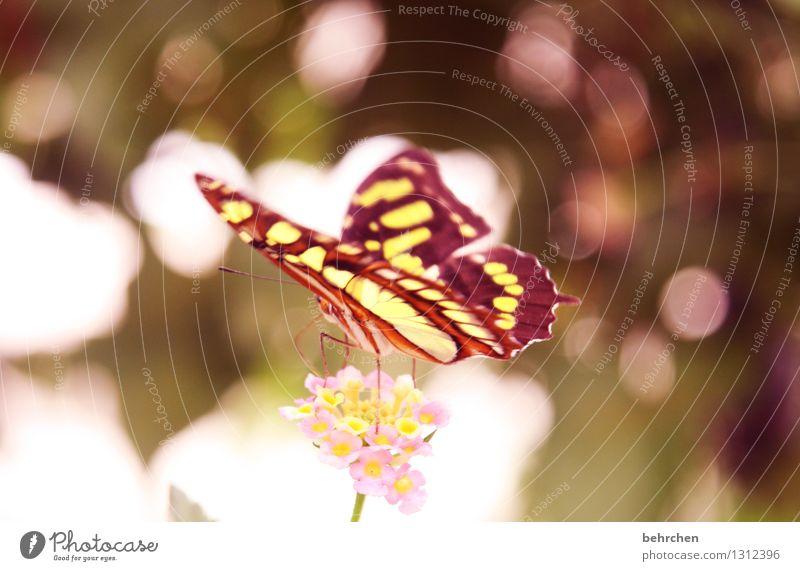 traumzauberland Natur Pflanze schön Sommer Blume Erholung Blatt Tier gelb Blüte Frühling Wiese Garten außergewöhnlich Beine fliegen
