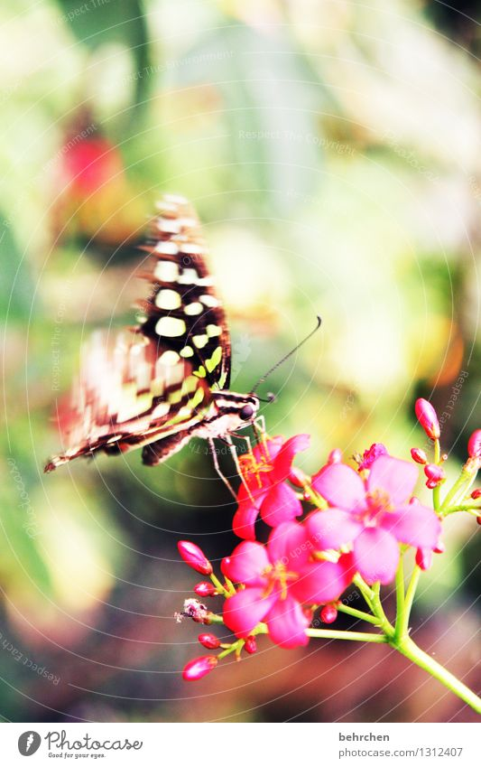 farbrausch Natur Pflanze schön Sommer Blume Blatt Tier Blüte Frühling Wiese Auge Garten außergewöhnlich fliegen Park Wildtier