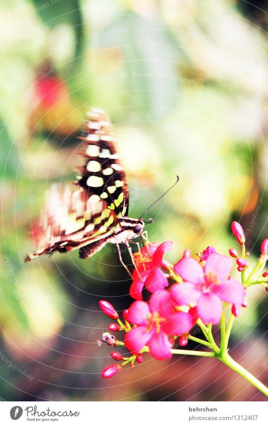 farbrausch Natur Pflanze Tier Frühling Sommer Schönes Wetter Blume Blatt Blüte Garten Park Wiese Wildtier Schmetterling Tiergesicht Flügel 1 fliegen Fressen