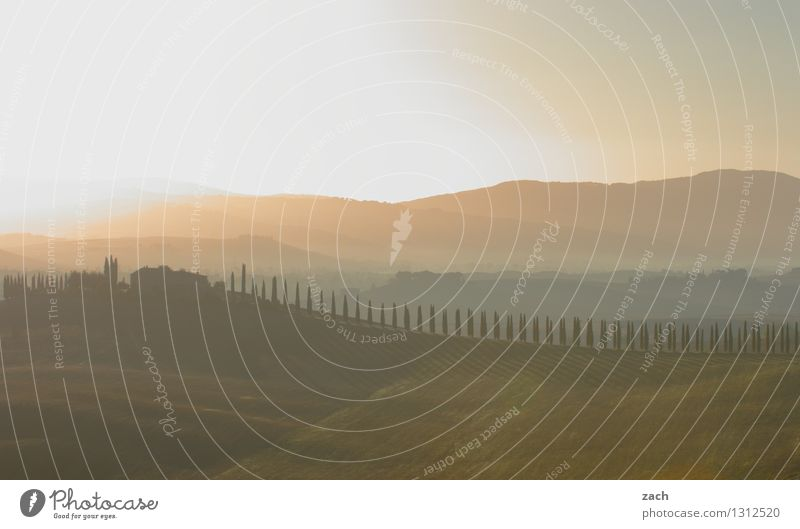 Tuschkasten Umwelt Landschaft Himmel Sonnenaufgang Sonnenuntergang Sommer Schönes Wetter Pflanze Baum Zypresse Wiese Feld Hügel Italien Toskana Haus