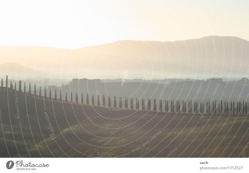 Aquarell Umwelt Landschaft Himmel Sonnenaufgang Sonnenuntergang Sommer Schönes Wetter Pflanze Baum Zypresse Wiese Feld Hügel Italien Toskana Haus Wege & Pfade