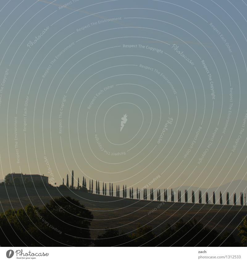 der Tag beginnt Umwelt Landschaft Himmel Sonnenaufgang Sonnenuntergang Sommer Schönes Wetter Pflanze Baum Zypresse Wiese Feld Hügel Italien Toskana Haus