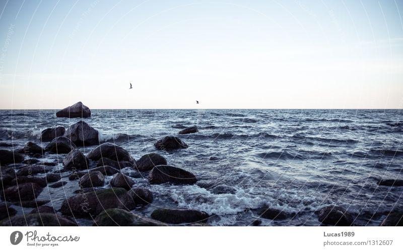 Möwen Natur Ferien & Urlaub & Reisen Sommer Erholung Meer Landschaft ruhig Tier Ferne Strand Winter Umwelt Küste Freiheit fliegen Stein