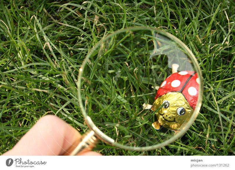 Hab ich dich du kleiner Schelm Marienkäfer Süßwaren vergrößert Lupe Suche Ostern Osterei Gras Sherlock Holmes Spuren Frühling Sommer Insekt Aluminium