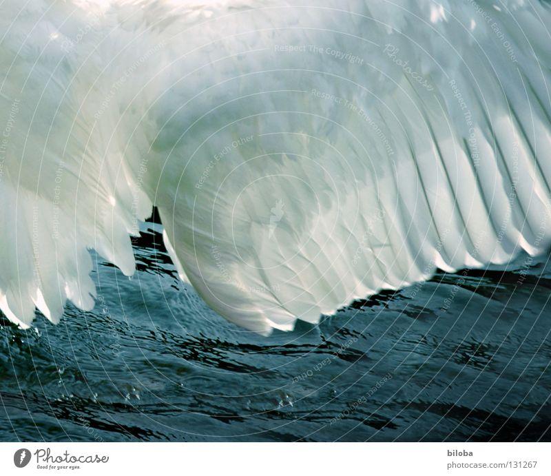 Federkleid Wasser weiß Tier schwarz See Vogel Kraft fliegen Arme elegant Kraft Feder Flügel weich Fluss lang