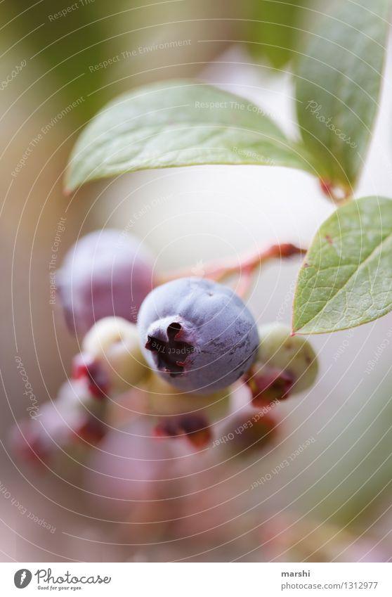 Heidelbeere Natur Pflanze Essen Garten Stimmung Frucht Sträucher Ernährung Beeren Blaubeeren