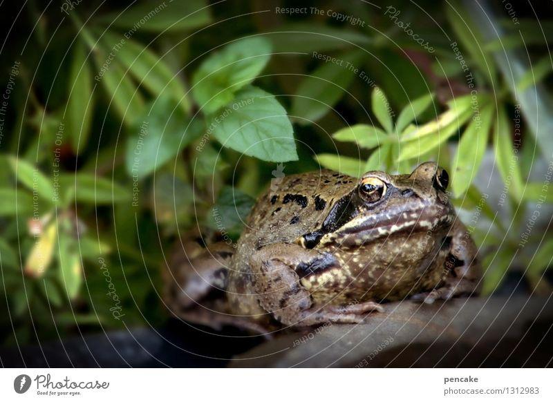streng geheim | schweigen ist gold Natur Pflanze Sommer Wasser Tier Garten Zeichen Urelemente Teich Frosch Märchen stumm Verschwiegenheit Verhext Kröte