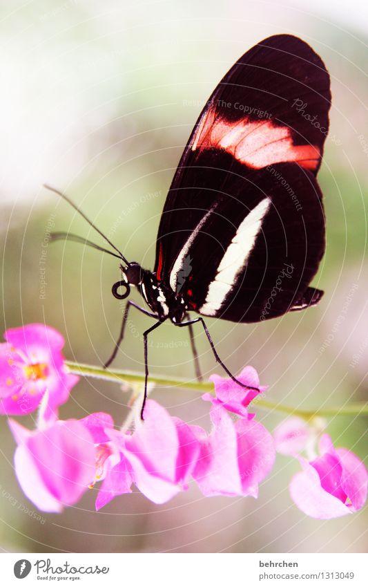 seiltänzer Natur Pflanze Tier Frühling Sommer Baum Blume Blüte Wildpflanze Garten Park Wiese Wildtier Schmetterling Tiergesicht Flügel 1 Blühend Duft Erholung