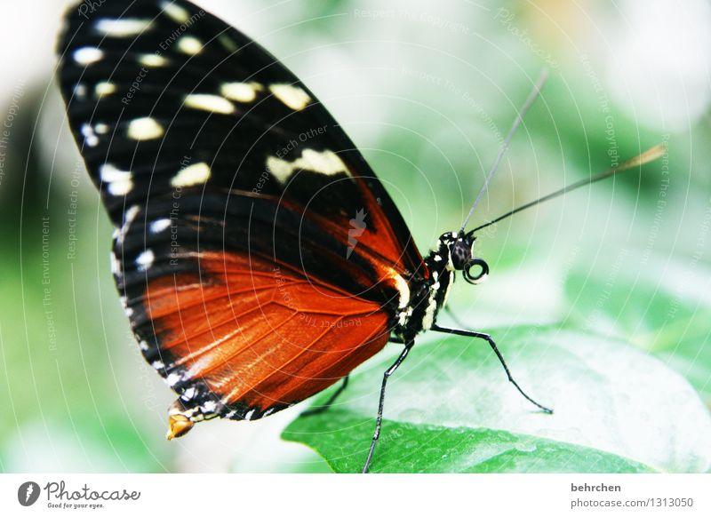 prachtkerl Natur Pflanze schön Sommer Baum Erholung Blatt Tier Frühling Wiese außergewöhnlich Garten Beine fliegen orange Park