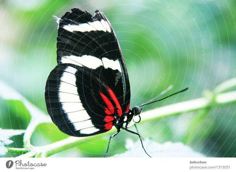 unperfekte schönheit Natur Pflanze Tier Baum Sträucher Blatt Garten Park Wiese Wildtier Schmetterling Tiergesicht Flügel 1 beobachten Erholung fliegen Fressen