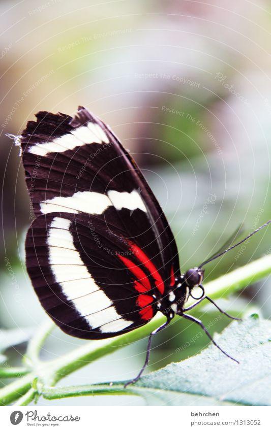 angeknabbert Natur Pflanze Tier Frühling Sommer Schönes Wetter Baum Sträucher Blatt Garten Park Wiese Wildtier Schmetterling Tiergesicht Flügel 1 beobachten