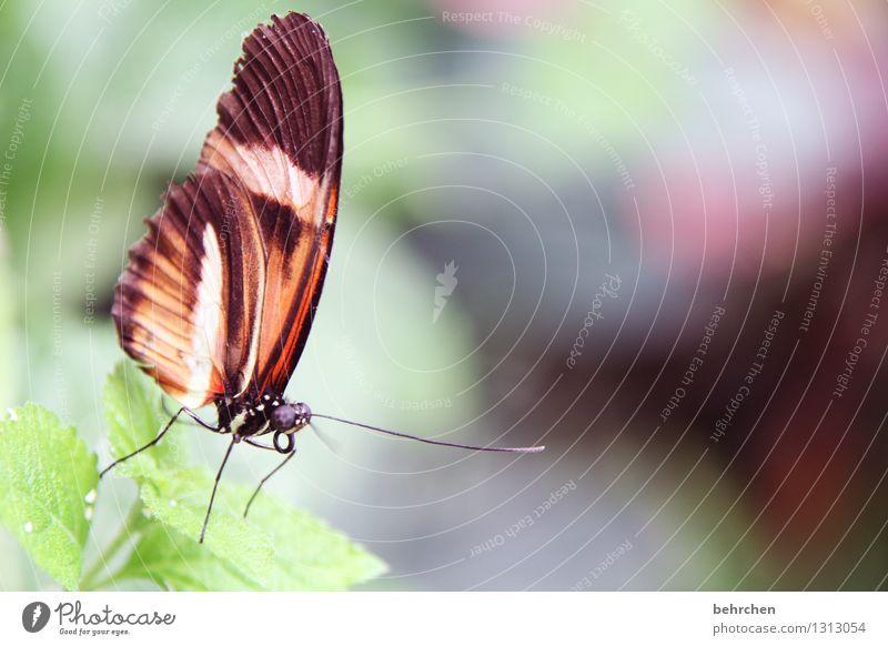 ...und hinab Natur Pflanze Sommer schön Baum Erholung Blatt Tier Wiese klein Beine Garten außergewöhnlich fliegen Park elegant
