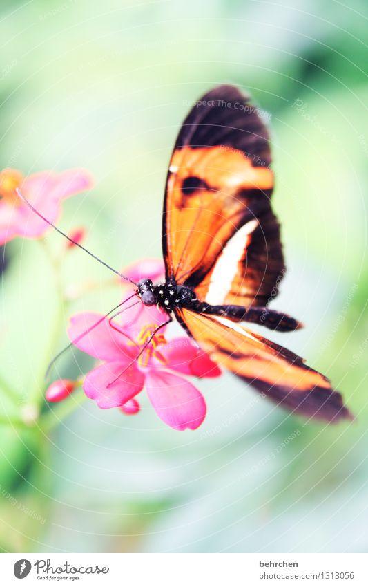 biegsam Natur Pflanze schön Baum Erholung Blatt Tier Blüte Wiese außergewöhnlich Garten fliegen Park Wildtier Flügel Blühend