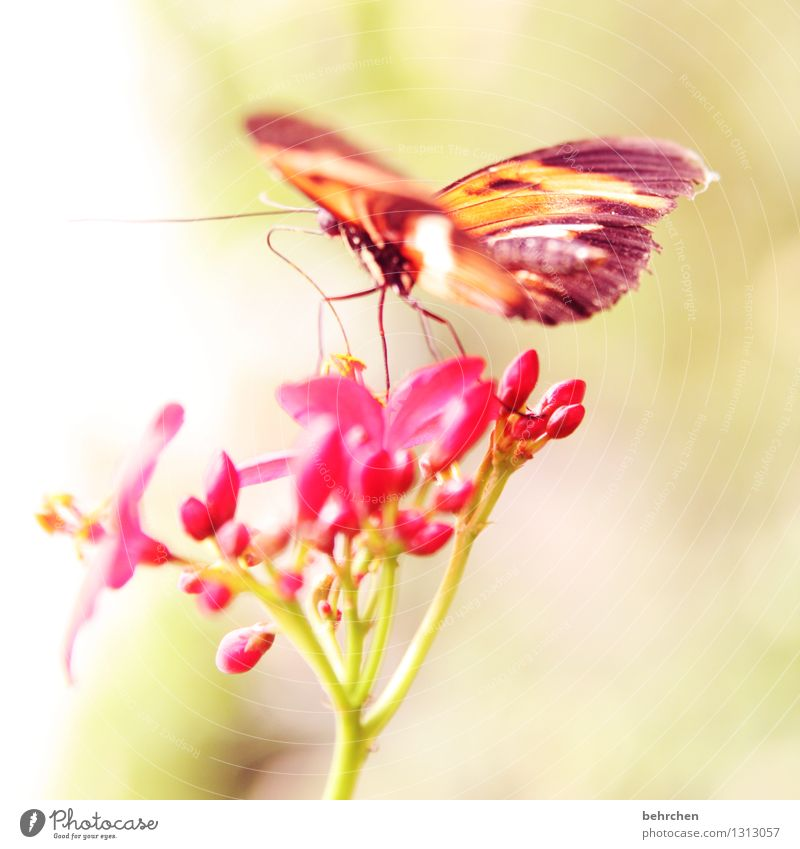 leichtigkeit Natur Pflanze schön Blume Blatt Tier Blüte Wiese klein Beine außergewöhnlich Garten fliegen Park Wildtier Flügel
