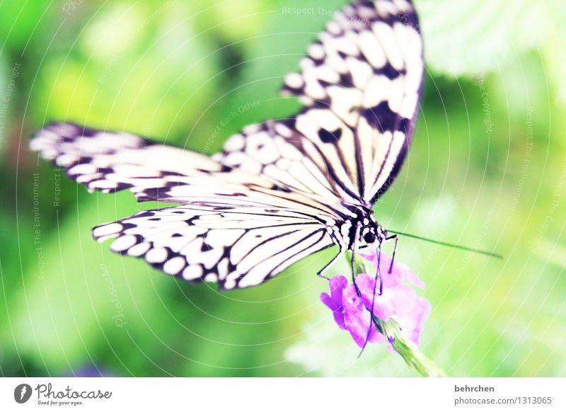 balanceakt Natur Pflanze Tier Sommer Blume Blatt Blüte Garten Park Wiese Wildtier Schmetterling Tiergesicht Flügel Weiße Baumnymphe 1 beobachten Blühend Duft